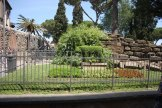 Capitoline Wolf shaped hedge