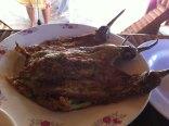 Fried eggplant in eggwash!
